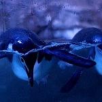 areá de pinguinos  exhibidos en el acuario inbursa 1