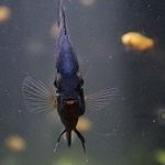 diversas especies marinas se muestran en el acuario inbursa el cual cumple dos años de abrir sus puertas 1