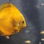 diversas especies marinas se muestran en el acuario inbursa el cual cumple dos años de abrir sus puertas