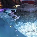 durante el segundo aniversario del acuario inbursa se presento una sirena 3