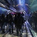 segundo aniversario del acuario Inbursa