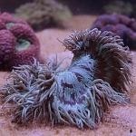 exhibición de Corales en el laboratorio submarino Blau Life ciudad de México