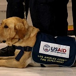 perros entrenados en la localización de sobrevivientes del equipo de rescatista de los EUA