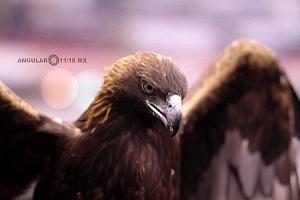 Mascota de las Aguilas del America