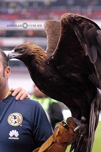 Mascota de las Aguilas del America en el estadio Azteca