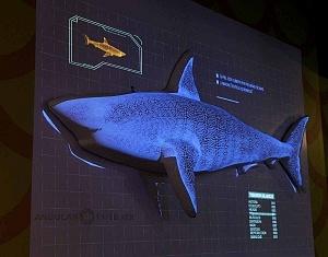 INBURSA estrena acuario interactivo esquema de un tiburon blanco 1