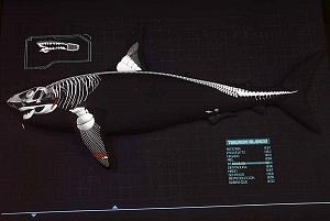 INBURSA estrena acuario interactivo esquema de un tiburon blanco esqueleto