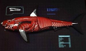 INBURSA estrena acuario interactivo esquema de un tiburon blanco musculos