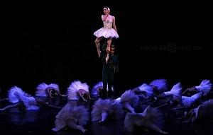 El Lago de los Cisnes Regresa al Palacio de Bellas Artes 12