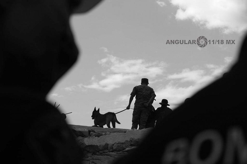 CDMX 19 de Septiembre de 2017 , autoridades ,con elemento canino en busca de sobrevivientes tras edificio colapsado (fotos archivo)