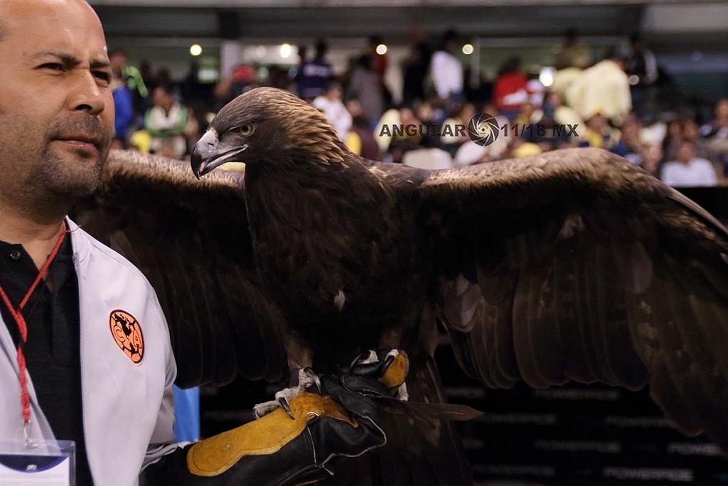 América vence al Toluca, y está dentro de la Semifinal-Apertura 2018 mascota de las Águilas